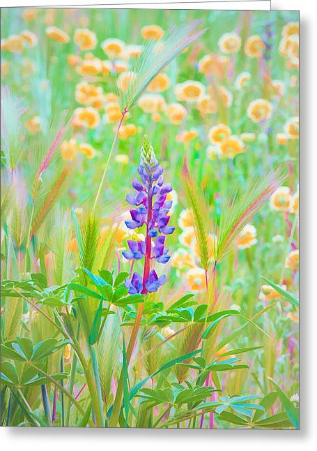 Wildflower Meadow - Spring In Central California Greeting Card