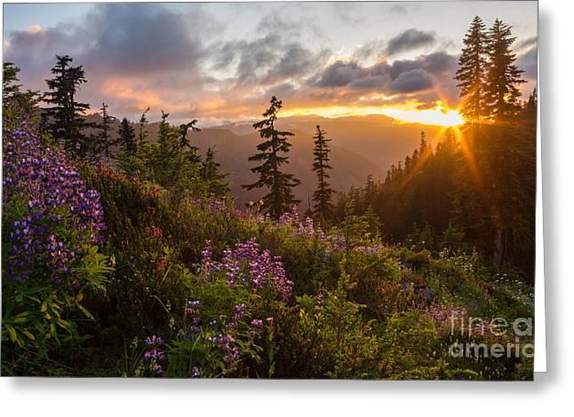 Wildflower Meadows Sunstar Greeting Card