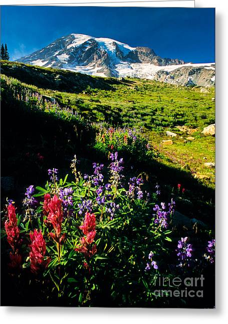 Wildflower Paradise Greeting Card by Inge Johnsson