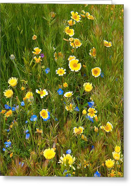 Wildflower Salad - Spring In Central California Greeting Card