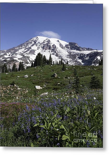 Wildflower Season At Mt Rainier Greeting Card