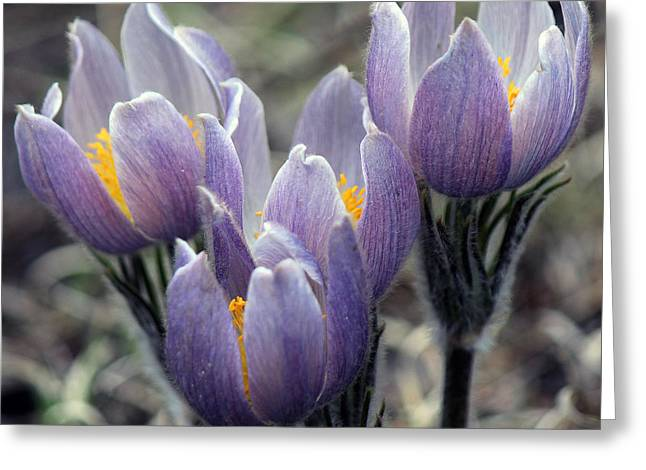 Wildflower Greeting Card by Silke Brubaker