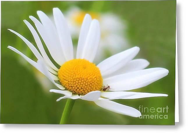 Wildflower Greeting Card by Sylvia  Niklasson