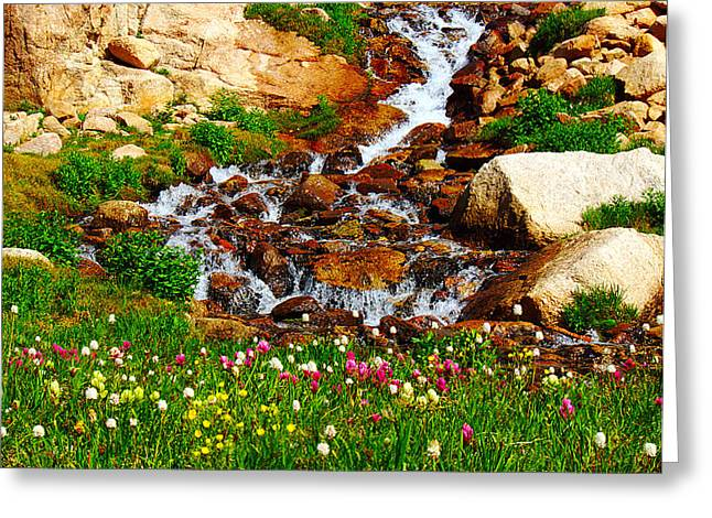 Wildflower Waterfall Greeting Card