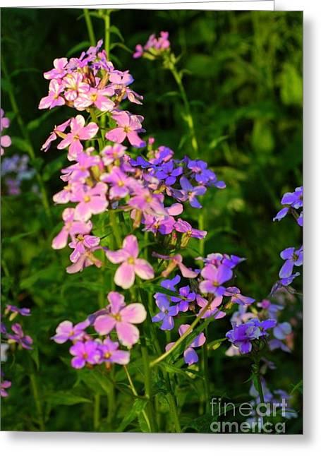 Wildflower Woods Greeting Card