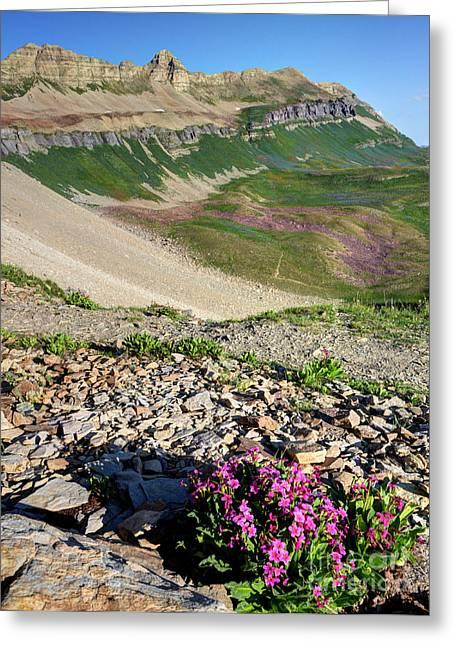 Wildflowers Above Timpanogos Basin At Sunrise Greeting Card