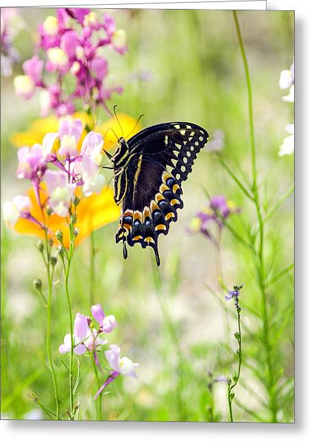 Wildflowers And Butterfly Greeting Card by Bill LITTELL