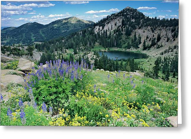 Wildflowers And View Of Lake Catherine Greeting Card by Howie Garber