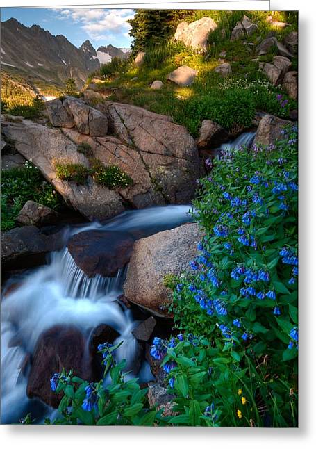 Wildflowers And Waterfalls In The Indian Peaks Greeting Card by Mike Berenson