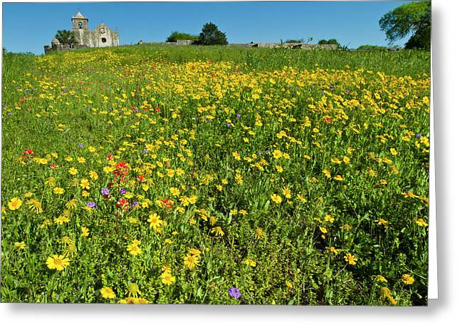 Wildflowers At Presidio La Bahia Greeting Card