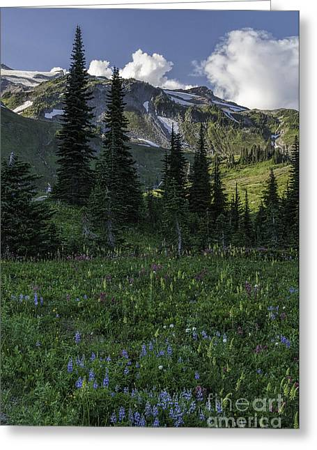 Wildflowers At Rainier Greeting Card