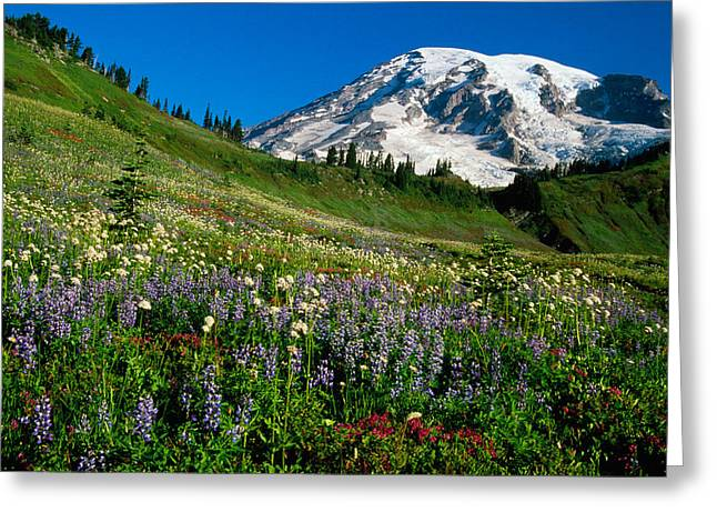 Wildflowers Blooming In Front Of Snowy Greeting Card by Panoramic Images