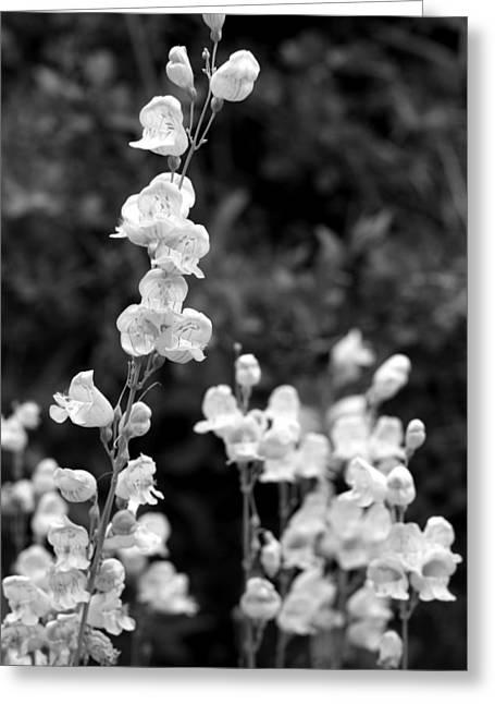 Wildflowers/bw1 Greeting Card