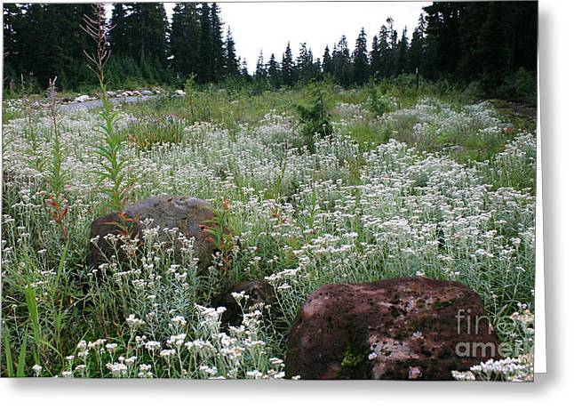 Wildflowers Callaghan Lake  Canada Greeting Card by Amanda Holmes Tzafrir
