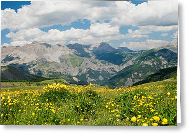 Wildflowers In A Field, Champs Pass Greeting Card by Panoramic Images
