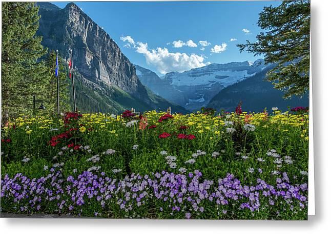 Wildflowers In Banff National Park Greeting Card by Howie Garber