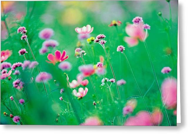 Wildflowers In Bloom Greeting Card