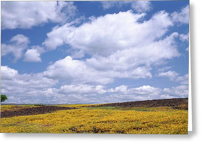Wildflowers In Bloom, Table Mountain Greeting Card by Panoramic Images