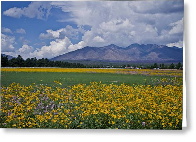 Greeting Card featuring the photograph Wildflowers In Flag 9611 by Tom Kelly