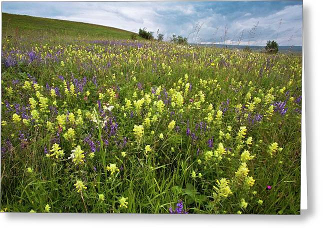 Wildflowers In Hay Meadow Greeting Card by Bob Gibbons