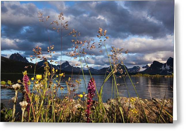 Wildflowers In The Canadian Rockies Greeting Card
