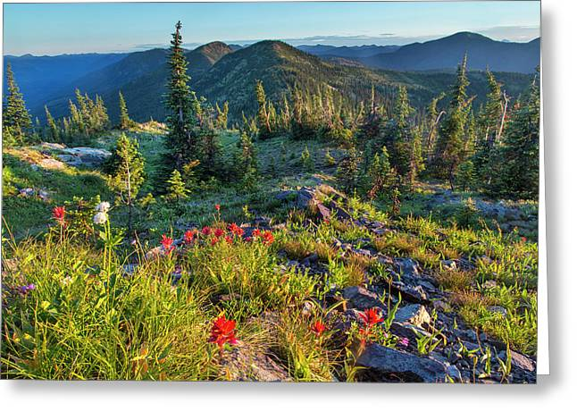 Wildflowers In The Whitefish Range Greeting Card by Chuck Haney