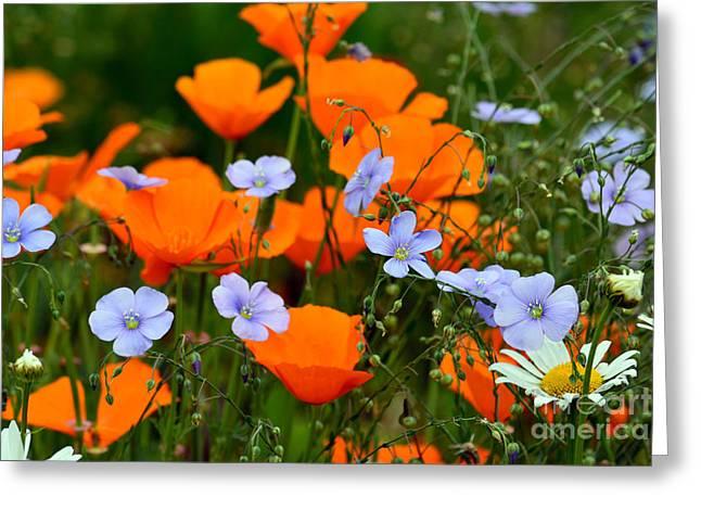 Gabriella's Flowers Greeting Card by Lisa L Silva