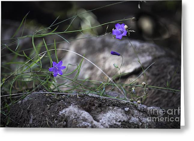 Wildflowers On Rocks Greeting Card