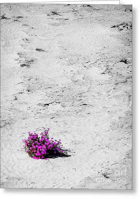Wildflowers On White Sands Greeting Card