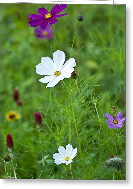 Wildflowers Tamed Greeting Card