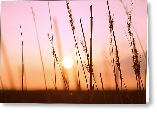 Wildgrass Sunset Greeting Card by David Schoenheit