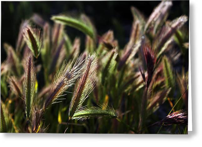 Greeting Card featuring the photograph Wildgrasses by Richard Stephen