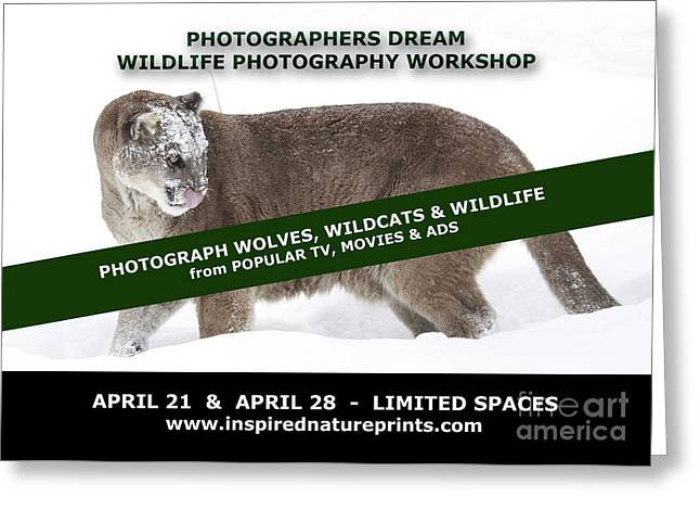 Wildlife Photography Workshop Greeting Card by Inspired Nature Photography Fine Art Photography