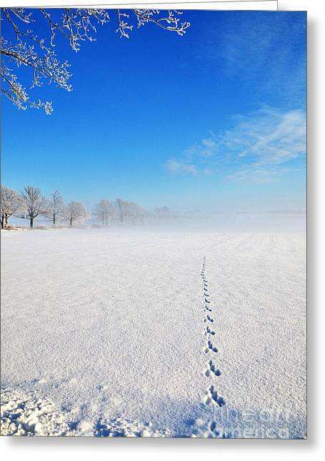 Greeting Card featuring the photograph Wildlife Tracks by Kennerth and Birgitta Kullman