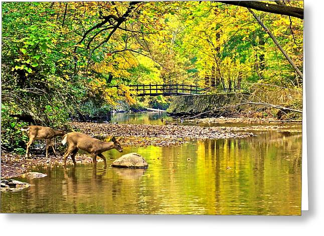 Wildlifes Thirst Greeting Card by Frozen in Time Fine Art Photography