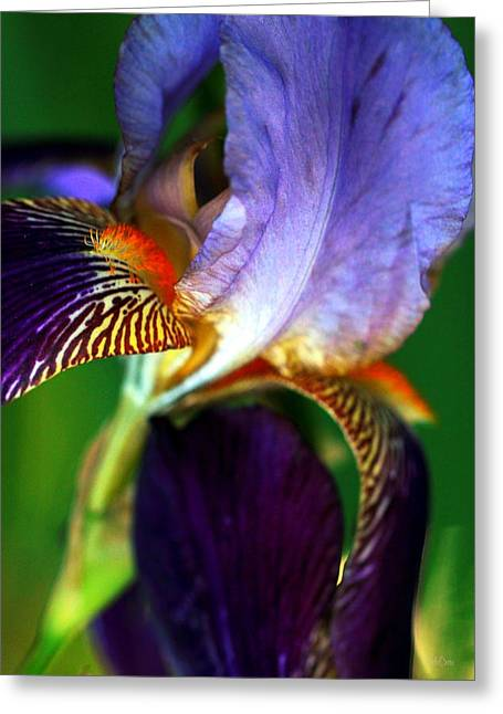 Wildly Colorful Greeting Card by Deborah  Crew-Johnson