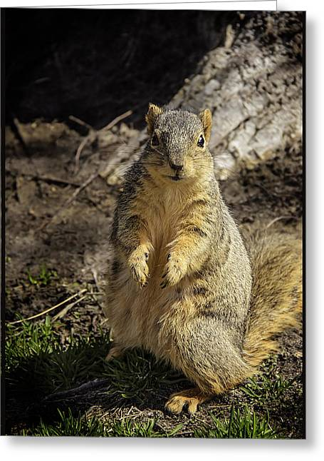 Will You Help A Squirrel In Need Greeting Card by LeeAnn McLaneGoetz McLaneGoetzStudioLLCcom