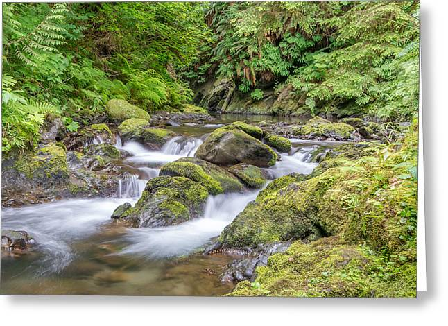 Willaby Creek Cascade - Olympic Peninsula Greeting Card