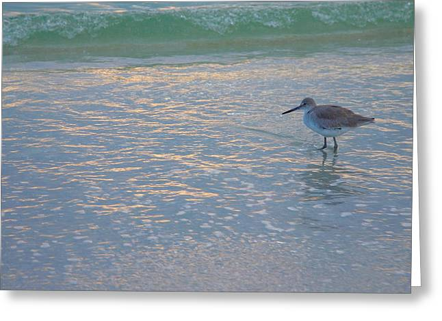 Willet At Dusk Greeting Card by Steven Ainsworth