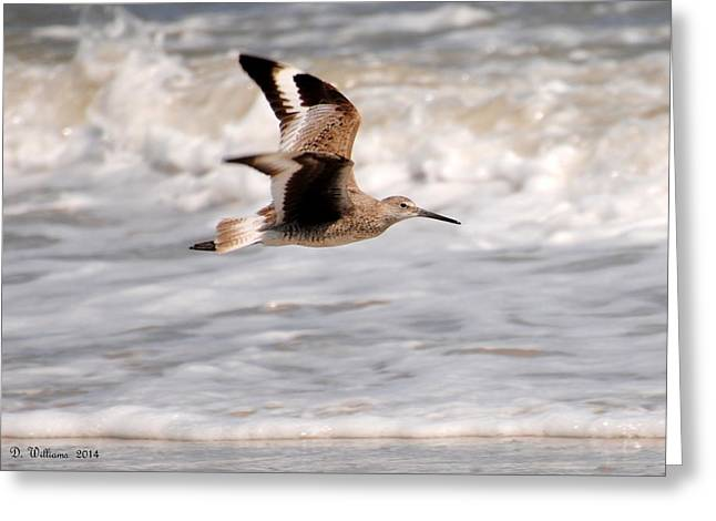 Willet In Flight Greeting Card