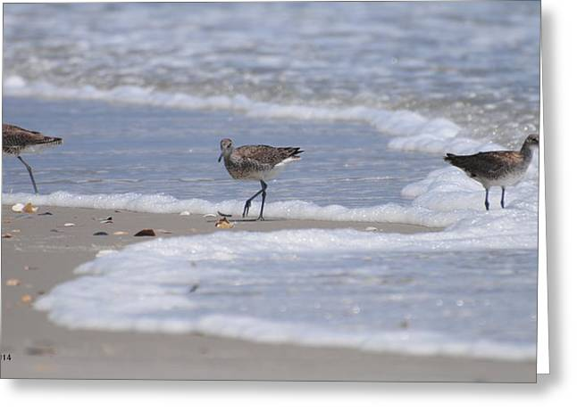 Willets On Ocracoke Greeting Card
