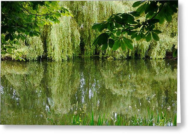 Greeting Card featuring the photograph Willows Reflected by Winifred Butler