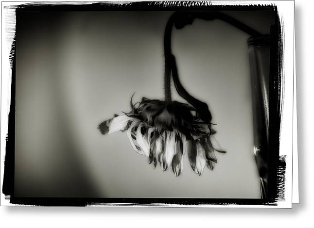 Wilted Sunflower Greeting Card by Jesse Castellano