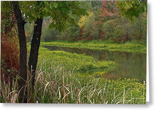Wilton Landing At Millwood Lake Greeting Card