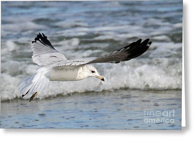 Wind Beneath My Wings Greeting Card by Geoff Crego