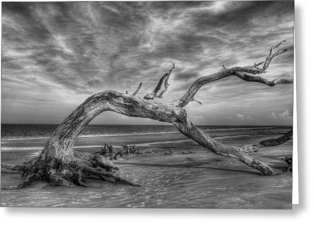Wind Bent Driftwood Black And White Greeting Card by Greg and Chrystal Mimbs