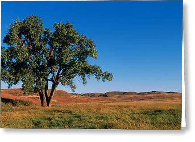 Wind Cave National Park, South Dakota Greeting Card by Panoramic Images