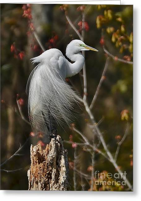 Wind In His Feathers Greeting Card by Kathy Baccari