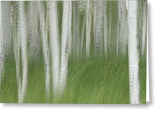Wind In The Aspen Greeting Card