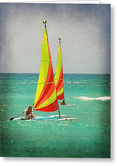 Wind Surfing Greeting Card by Lorella  Schoales